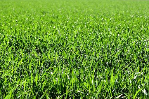 meadow 2184989 340