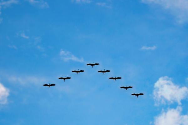 birds 216827 960 720